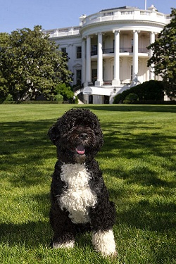 Жена Президента США хотела бы стать собакой
