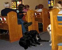 Собаки помогают священникам (США)