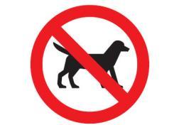 Исламская партия требует ввести полный запрет на собак (Нидерланды)