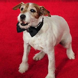 Собака станет ведущим церемонии Оскар