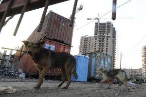 Бездомных собак вылечат в клиниках на колёсах (Украина)