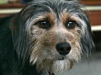 Собака сутки звала на помощь умирающей хозяйке (Казань)