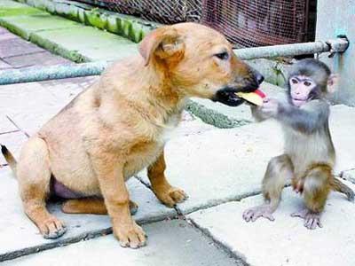 Собаки понимают человека лучше, чем обезьяны