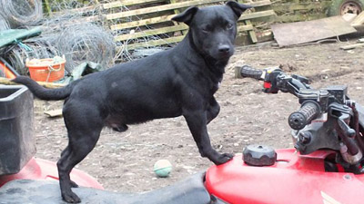 Верный пёс спас хозяина, попавшего в автомобильную аварию (Шотландия)