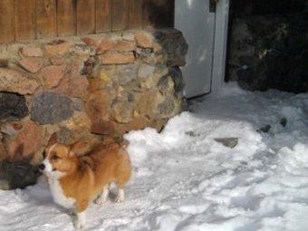 Считавшейся погибшей под лавиной собака вернулась домой