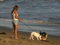 Собаки способны облегчить течение беременности