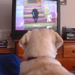 В США запустили телевизионный канал для собак