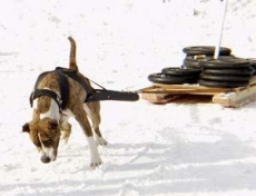 В Башкортостане наградили самую сильную собаку
