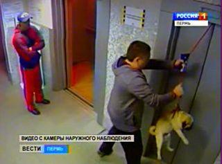 Чудесное спасение собаки (Пермь)