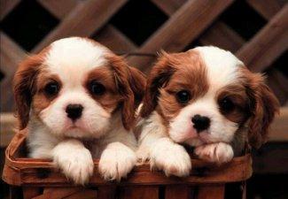 В Великобритании представили туристическую путевку для собак за 74 тысячи долларов