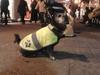 В Италии появился пёс-путешественник