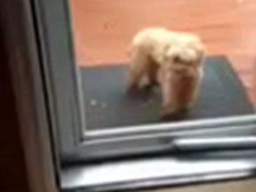 Пёс открыл дверь своей подруге