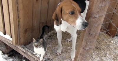 Собака спасла кошку, приютив в своей будке