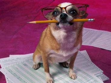 Учёную степень магистра присвоили... собаке (Великобритания)