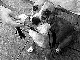 Игрушка для собаки своими руками