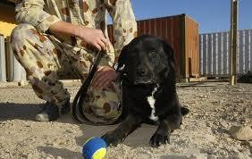 Собак проверят на профпригодность при помощи МРТ (США)