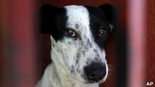 Собаки способны думать и обманывать как человек