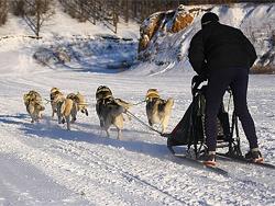 В Самарской области пройдет кругосветка на собачьих упряжках