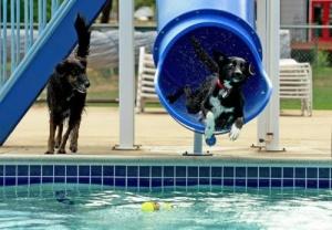 В Барселоне откроется аквапарк для собак