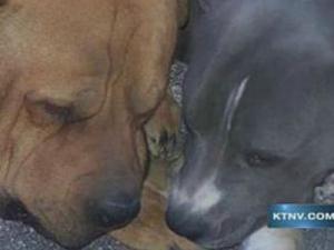 Полицейским грозит иск за убийство двух собак во время обыска (США)