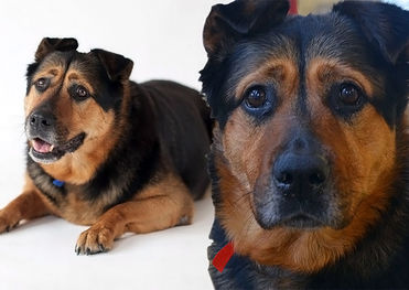 Самая грустная собака Великобритании надеется найти хозяев
