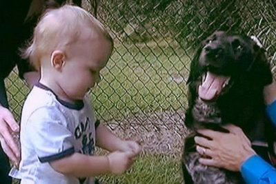 История о том, как собака разоблачила няню