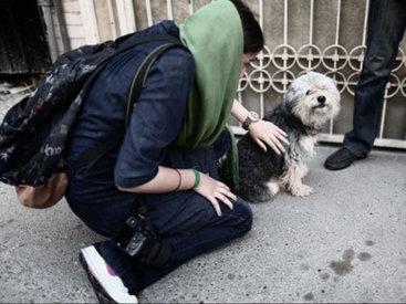 В Иране запретят выгул, содержание и разведение собак