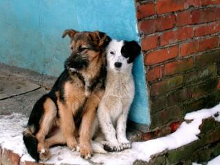 Бюджет оплачивает содержание собак, подобранных людьми на улице (Самара)
