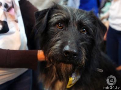 Собаки могут узнавать хозяев на фотографиях