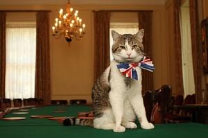 В Великобритании кошки впервые уступили собакам