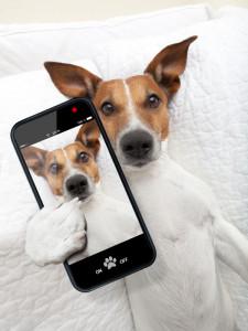 В России появилось первое мобильное приложение для собак