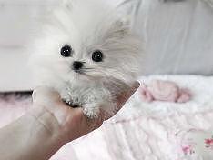 Любители домашних животных - добросовестные невротики