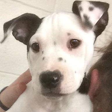 В США собака родилась со своим «селфи» на левом ухе
