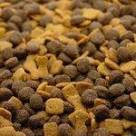 Как корма для кошек и собак влияют на окружающую среду?