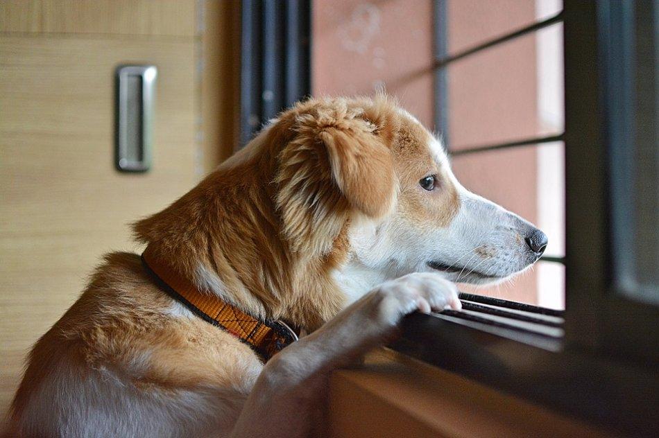 Знает ли собака, когда вернётся хозяин?