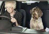 Собака боится автомобиля