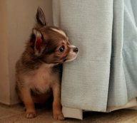 Собака боится разлуки